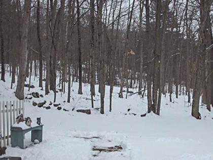 417A snowywoods