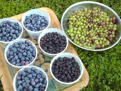 461 blueberries plus
