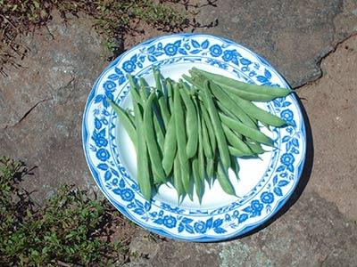 573 beans