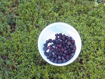 573 blackberries