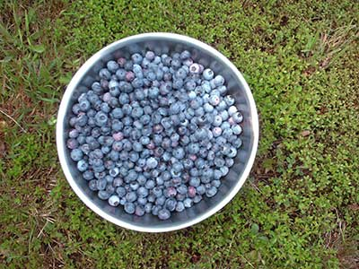 573 blueberries